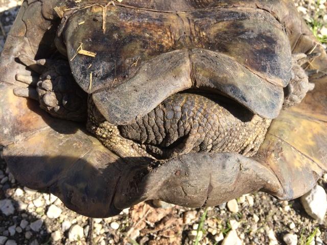 identifier notre tortue  Image18