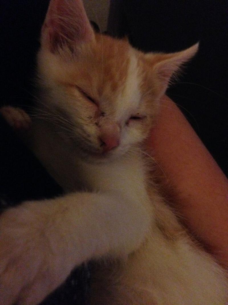 Zelda, le petit chaton d'isa  1qwtfl10