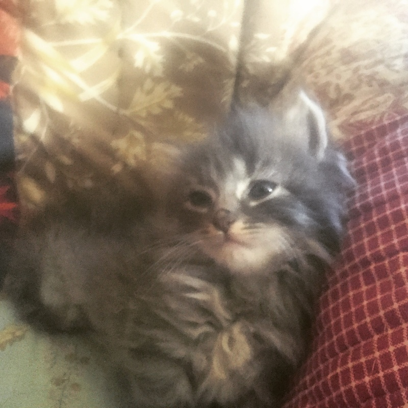 Zelda, le petit chaton d'isa  Image14