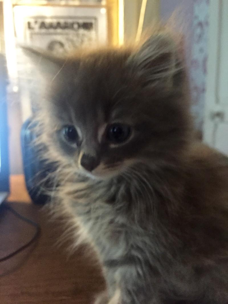 Zelda, le petit chaton d'isa  Image16