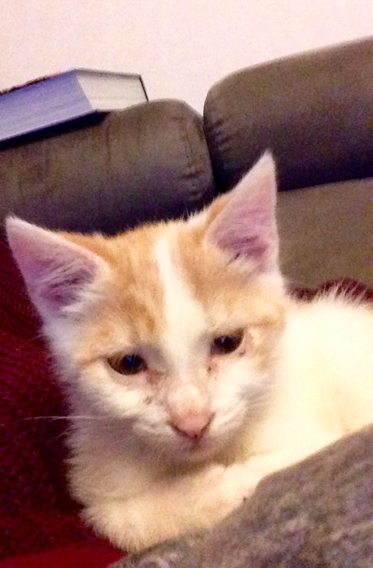 Zelda, le petit chaton d'isa  Image19