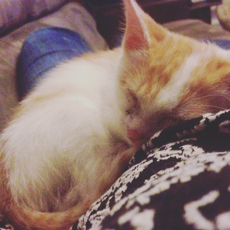 Zelda, le petit chaton d'isa  Image20