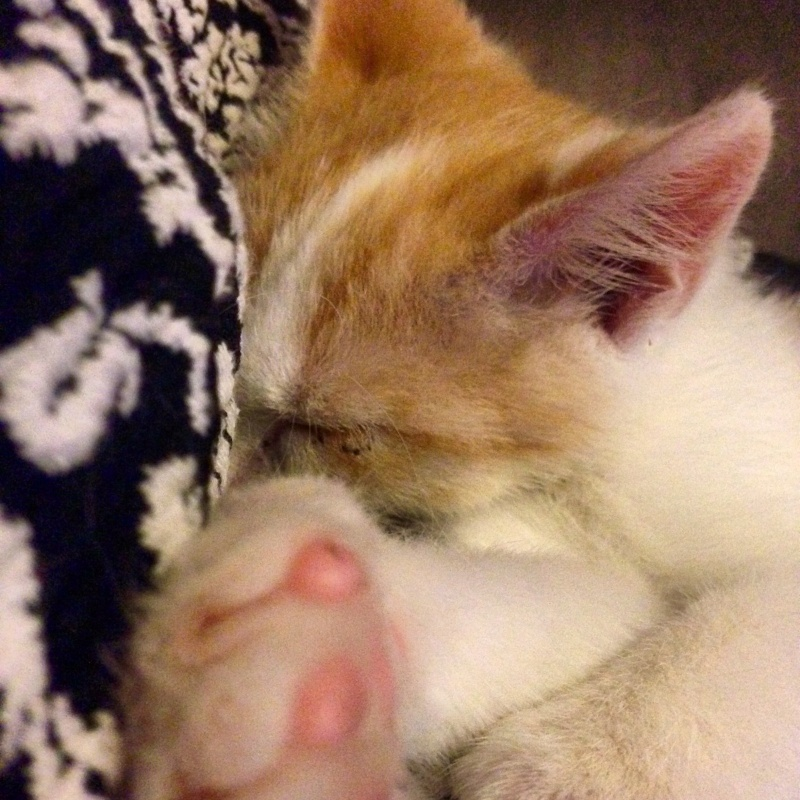 Zelda, le petit chaton d'isa  Image21