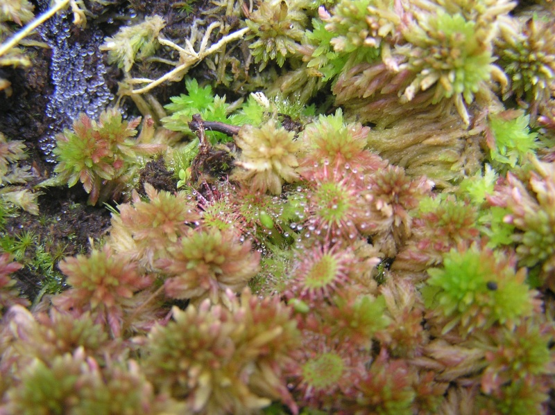 plante jumpy001 P8300013