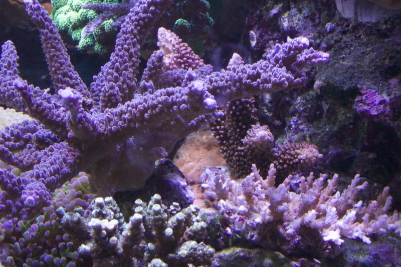 Le nouveau Reef d'Alexpilon, 600l custom - Page 37 _mg_2114