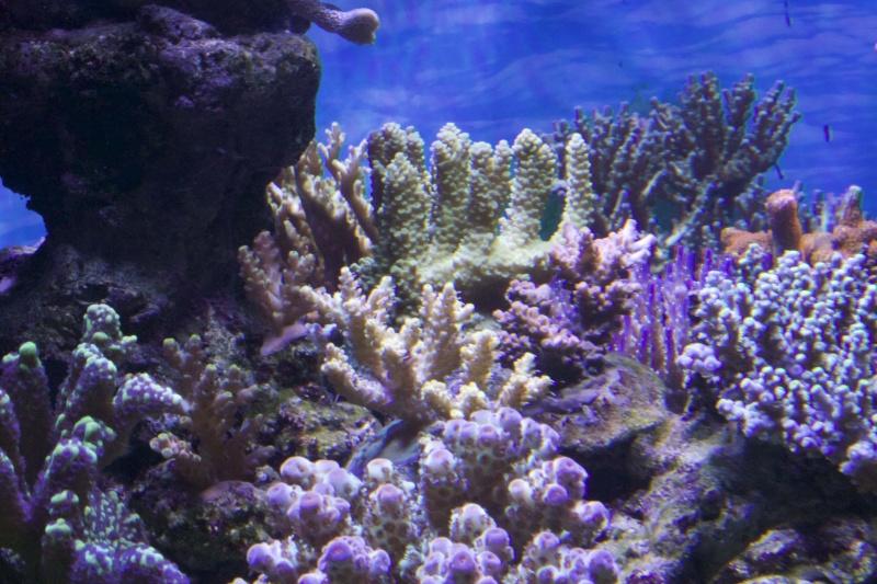 Le nouveau Reef d'Alexpilon, 600l custom - Page 37 _mg_2115