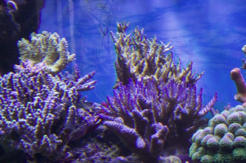 Le nouveau Reef d'Alexpilon, 600l custom - Page 37 _mg_2116