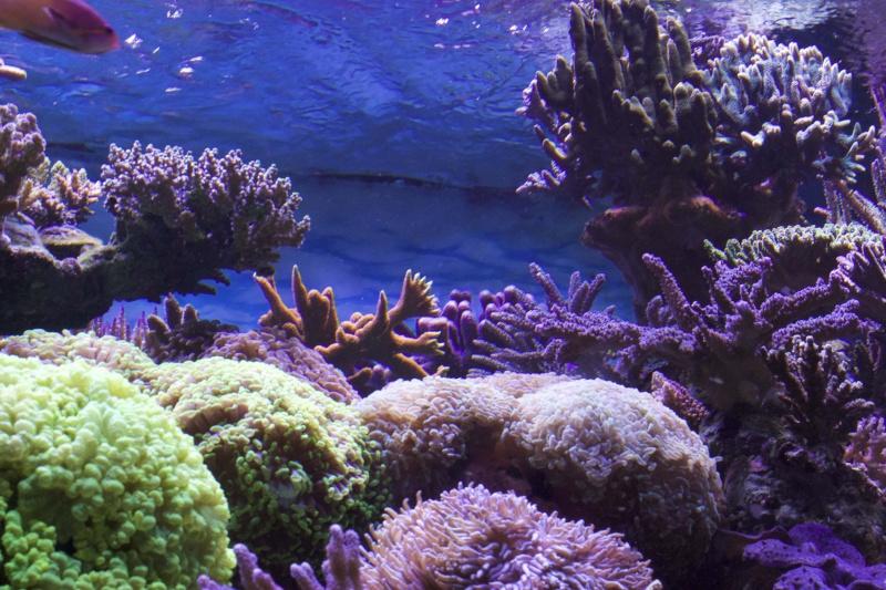 Le nouveau Reef d'Alexpilon, 600l custom - Page 37 _mg_2118