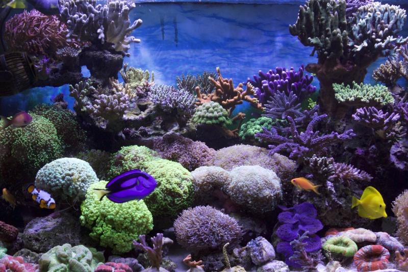Le nouveau Reef d'Alexpilon, 600l custom - Page 37 _mg_2119