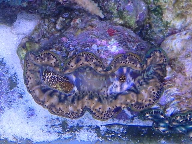 Le nouveau Reef d'Alexpilon, 600l custom - Page 37 Img_7316
