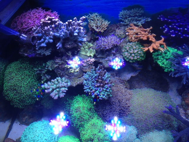 Le nouveau Reef d'Alexpilon, 600l custom - Page 37 Img_7325