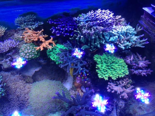 Le nouveau Reef d'Alexpilon, 600l custom - Page 37 Img_7326