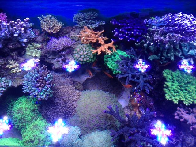 Le nouveau Reef d'Alexpilon, 600l custom - Page 37 Img_7327