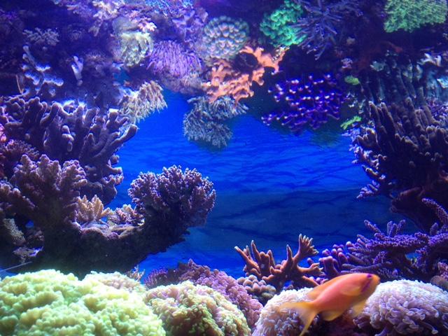 Le nouveau Reef d'Alexpilon, 600l custom - Page 37 Img_7329