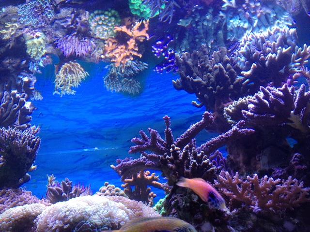 Le nouveau Reef d'Alexpilon, 600l custom - Page 37 Img_7330