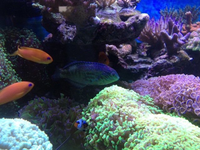 Le nouveau Reef d'Alexpilon, 600l custom - Page 38 Img_7414