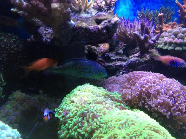 Le nouveau Reef d'Alexpilon, 600l custom - Page 38 Img_7417