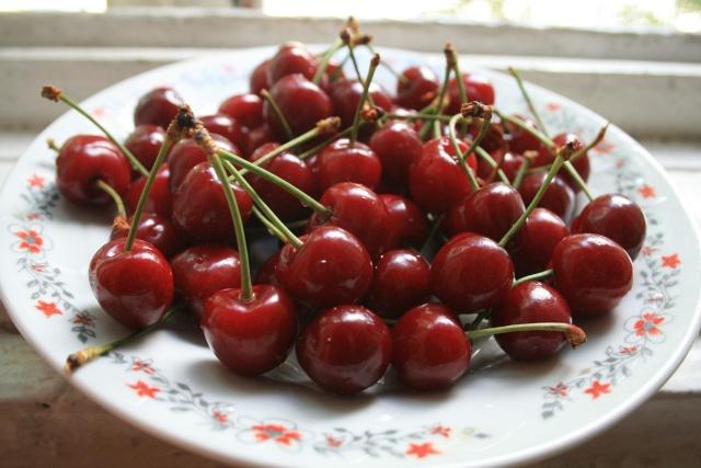 La récolte des fruits Cerise10
