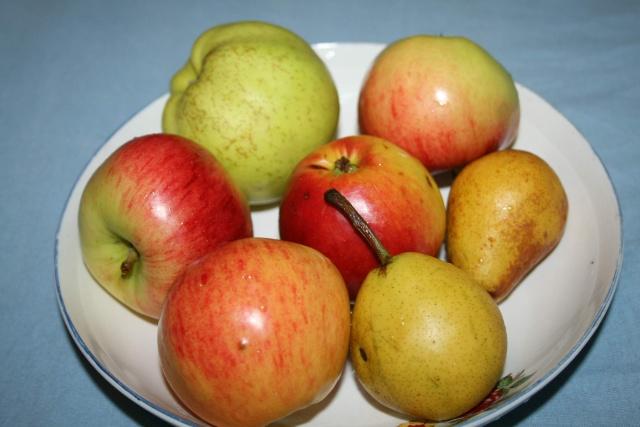 La récolte des fruits Fruits10