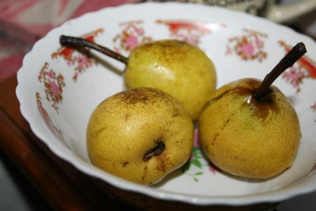 La récolte des fruits Poires10