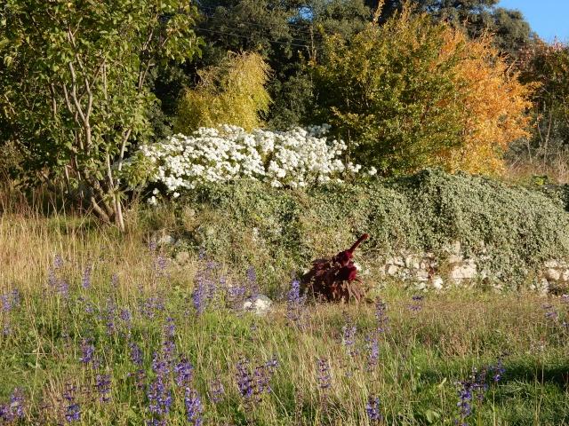 Amaranthus - les amarantes horticoles - Page 4 Photo_14