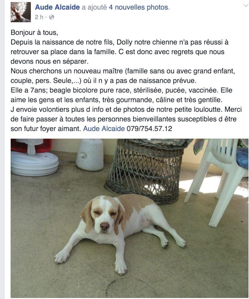 Chienne beagle 7 ans - Yverdon Suisse Captur11