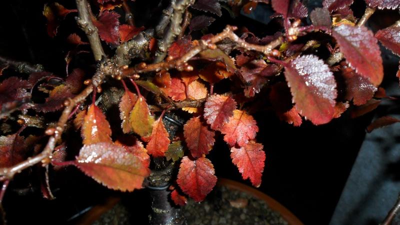 Il nostro Autunno - Pagina 4 Prunus10
