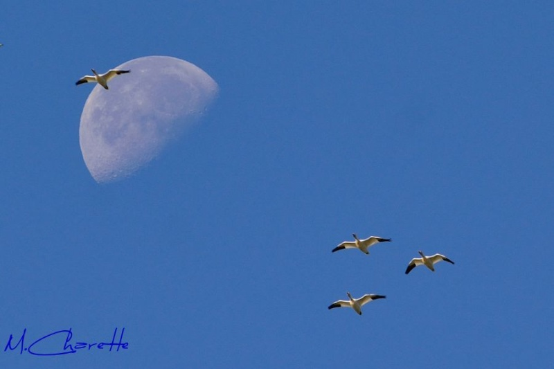 Au clair de la lune ...  021_0110