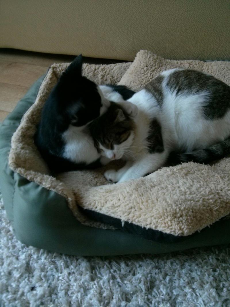 LOOKY, mâle Blanc et Brown Tabby né le 10 mai 2015 Img_2015