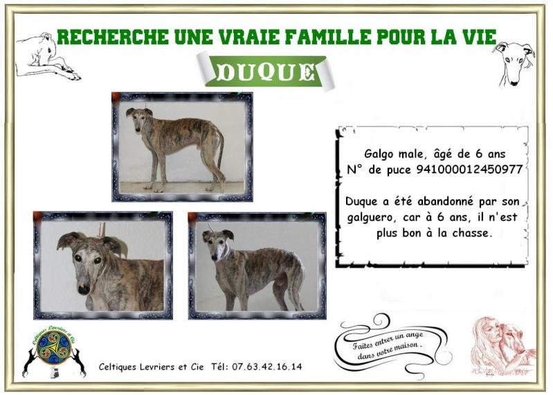 Duque - galgo - 6 ans Fiche_15