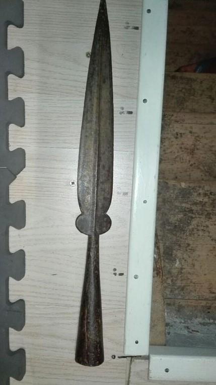 Fer de lance à identifier 56f5e910