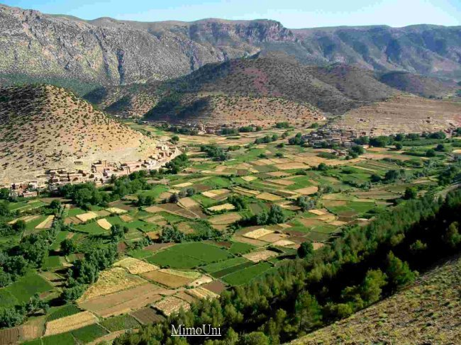 amazigh - Reseau Mimouni arbore le culte de l'Amazigh et l'Amazighité Mimoun25