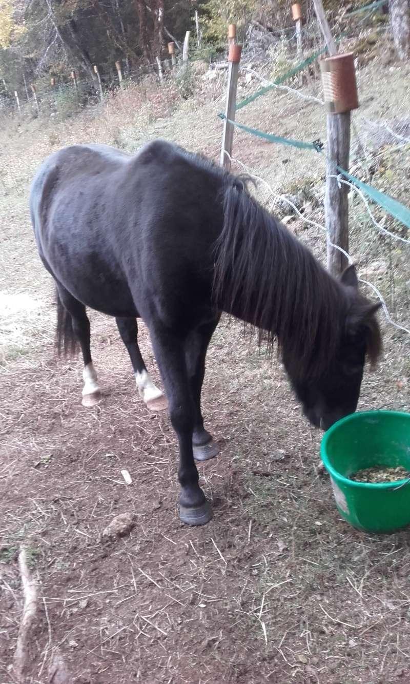 HAVANE - OI poney  née en 1995 - adoptée en mars 2014 par dona carlota - Page 2 20151010