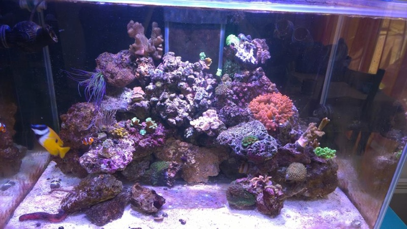 Merow reef  - Page 2 12189610