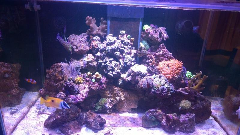 Merow reef  Wp_20123