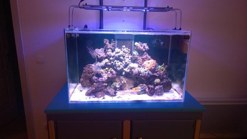 Merow reef  Wp_20124