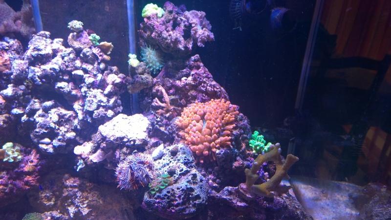 Merow reef  Wp_20125
