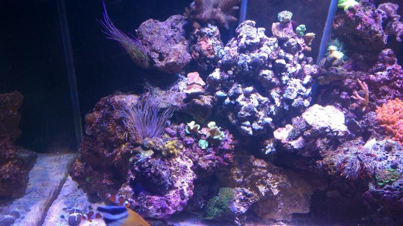 Merow reef  Wp_20126