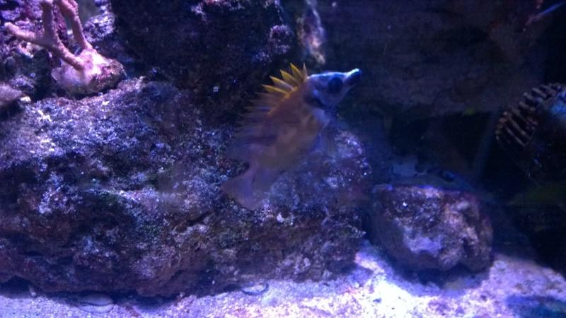 Merow reef  Wp_20127