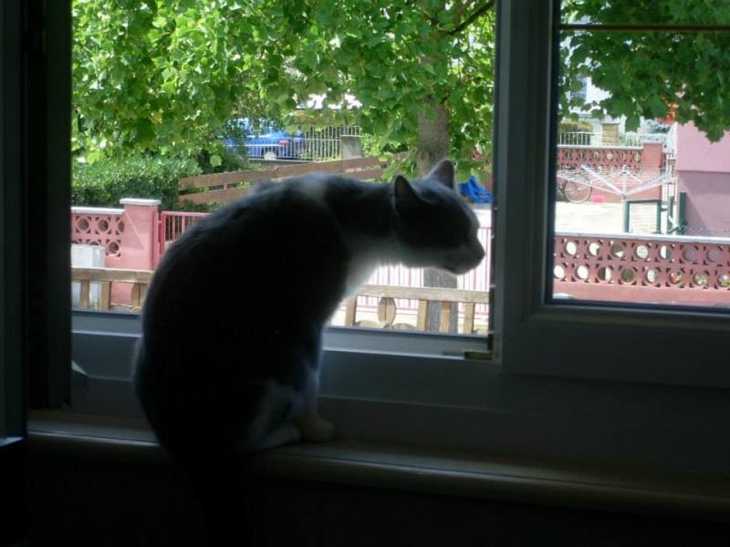 Lancelot, mâle, 01.07.2013, bleu et blanc 11891110