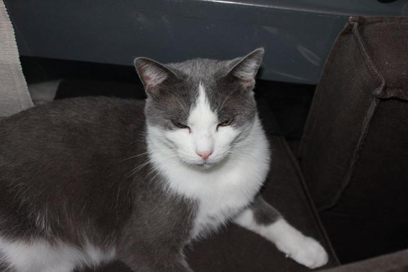 Lancelot, mâle, 01.07.2013, bleu et blanc 12006210