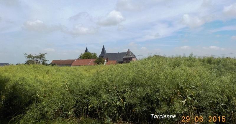 CR du 29-6-15, à l'assaut des châteaux pour Gaël... 2512