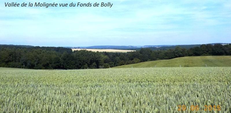 CR du 29-6-15, à l'assaut des châteaux pour Gaël... 4811