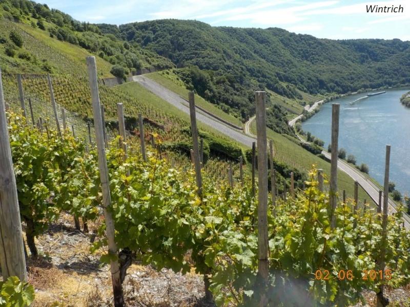 CR de juin 2015 en Moselle allemande (1) Dscn0771