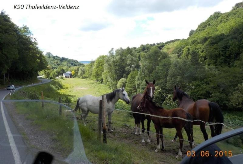 CR de juin 2015 en Moselle allemande (2) Dscn0848