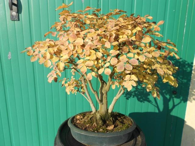 I colori dell'autunno Dscn6315