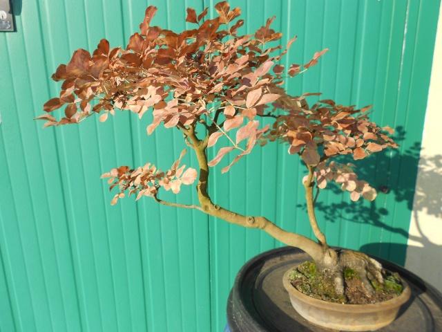 I colori dell'autunno Dscn6316