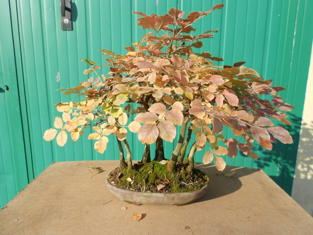 I colori dell'autunno Dscn6317