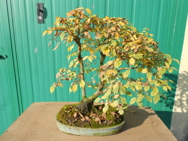 I colori dell'autunno Dscn6320
