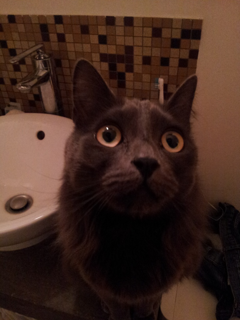 HELIO (Whiskas) et NEL (Giddy) - Page 4 20150510